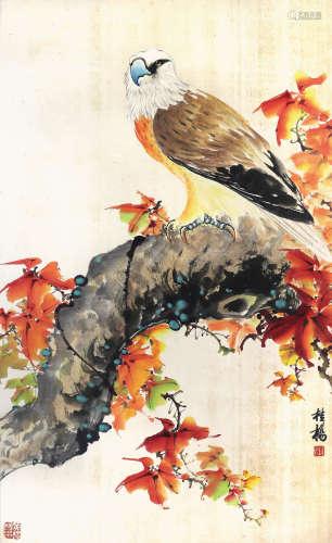 黃桂楊  紅葉蒼鷹
