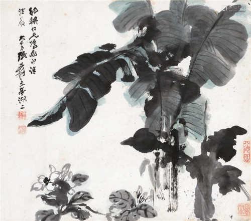 张大千(1899~1983) 芭蕉 镜框 设色纸本