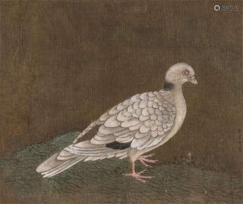 黄居中(款) 白鸽图 镜心 绢本