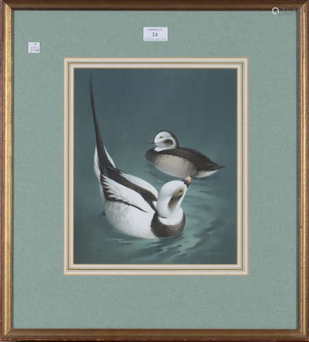 Raymond Watson - 'Long-tailed Duck', 20th century watercolour with gouache, signed recto, titled